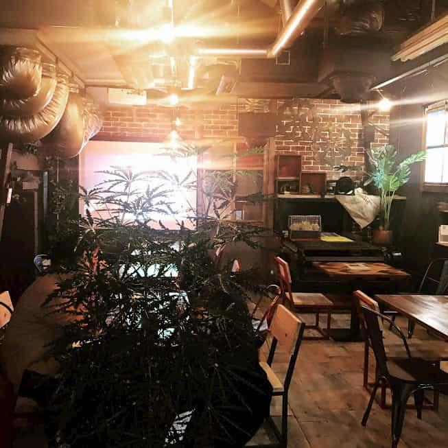 DIY好きな人とカフェの素敵なマッチング! メイン画像